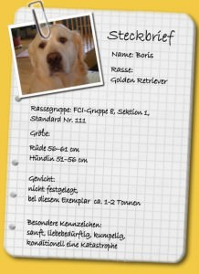 Hunderassen-Steckbrief-Golden-Retriever