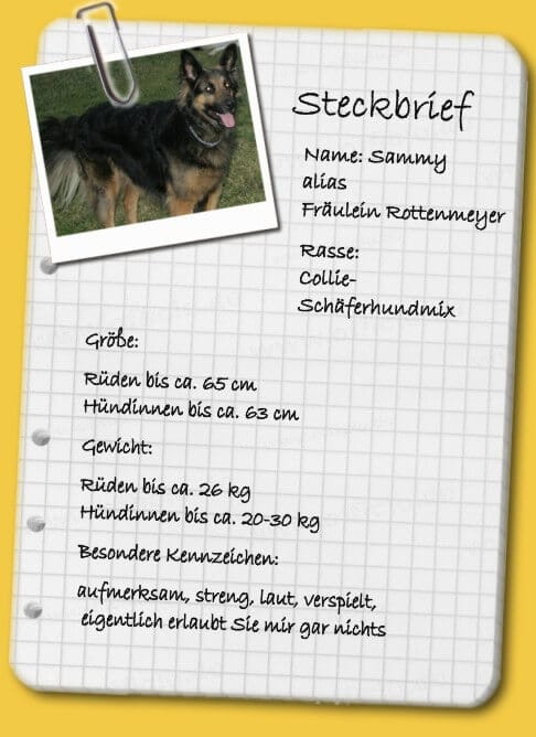 Steckbrief Schaeferhund-Collie